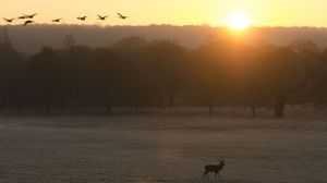 deer_in_early_morning_light_copyrightRhiannonOrmerod.jpg