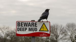 crow_on_beware_sign_copyrightRhiannonOrmerod.jpg